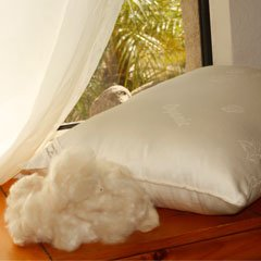 SO SILKY! Kapok - Vegan King Pillow with Organic Cotton Damask - Medium Fill