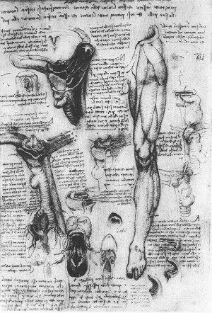 Anatomical Studies - Larynx and Leg