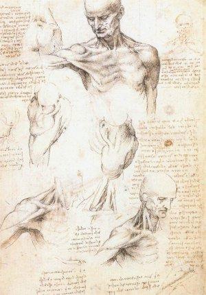 Anatomical Studies - Male Shoulder