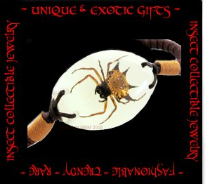 COLLECTIBLE REAL INSECT JEWELRY SPIDER BRACELET ECIC-NB3107
