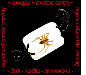COLLECTIBLE REAL INSECT JEWELRY SPIDER BRACELET ECIC-NB3003