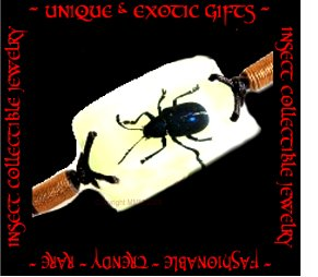COLLECTIBLE REAL INSECT JEWELRY RARE BLUE LEAF BEETLE BRACELET ECIC-NB3004