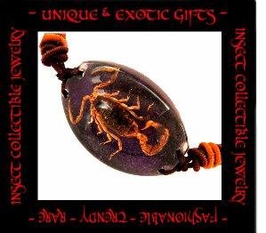 COLLECTIBLE REAL INSECT JEWELRY PURPLE COLORED SAND SCORPION BRACELET ECIC-NB3100