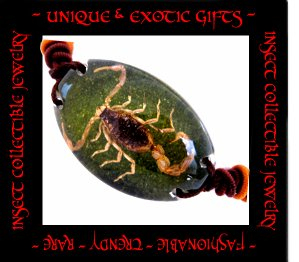 COLLECTIBLE REAL INSECT JEWELRY GREEN COLORED SAND SCORPION BRACELET ECIC-SB2101