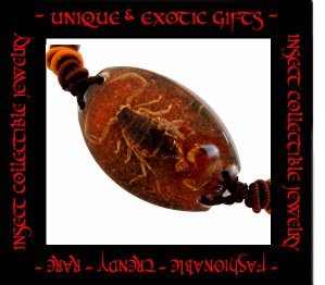 COLLECTIBLE REAL INSECT JEWELRY ORANGE COLORED SAND SCORPION BRACELET ECIC-SB2103