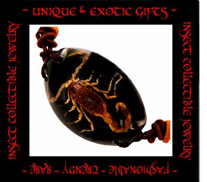COLLECTIBLE REAL INSECT JEWELRY BLACK COLORED SAND SCORPION BRACELET ECIC-SB2100