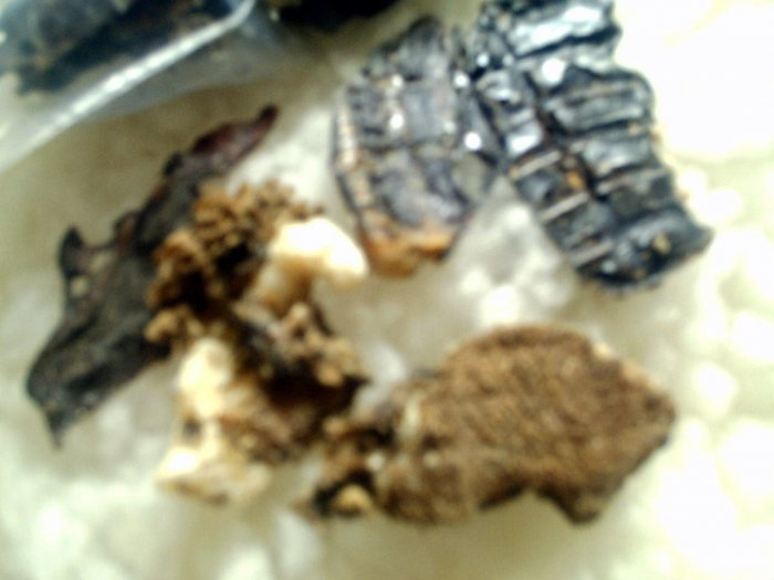 100% all meat dog  treats- Beef & Pork Bickys- they ain't pretty but dogs luv em!