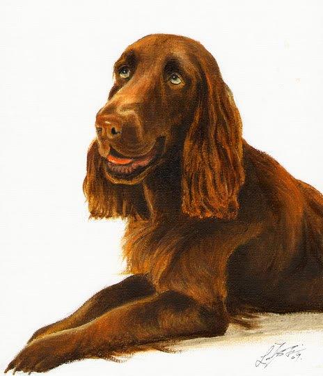 � Original DOG Oil Portrait Painting FIELD SPANIEL Art