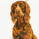 ★ Original DOG Oil Portrait Painting SUSSEX SPANIEL Art
