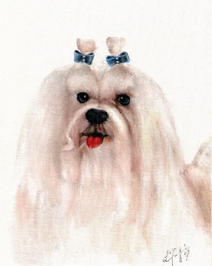 � Original Oil DOG Portrait Painting Art MALTESE w Bows