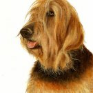 ★ Original Oil DOG Portrait Painting Artwork OTTERHOUND