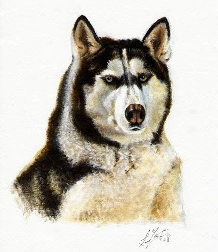 � Original DOG Oil Portrait Painting ALASKAN MALAMUTE �