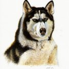 ★ Original DOG Oil Portrait Painting ALASKAN MALAMUTE ★