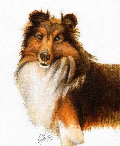 �Original Oil Portrait Painting SHELTIE SHEEPDOG COLLIE