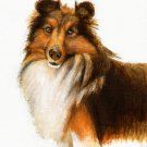 ★Original Oil Portrait Painting SHELTIE SHEEPDOG COLLIE
