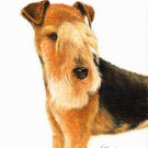★ Original Oil DOG Portrait Painting LAKELAND TERRIER ★