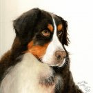 ★ Original Oil Portrait Painting BERNESE MOUNTAIN DOG ★