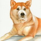 ★ ORIGINAL Oil DOG Portrait Painting Japanese AKITA Art