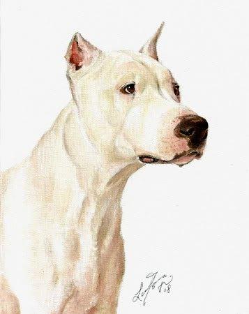 * Original Oil DOG Portrait Painting DOGO ARGENTINO Art
