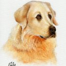 ★ Original Oil DOG Portrait Painting MAREMMA SHEEPDOG ★