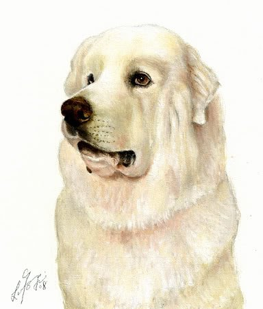 � Original Oil DOG Portrait Painting GREAT PYRENEES Art