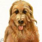 ★Original Oil DOG Portrait Painting CATALONIAN SHEEPDOG