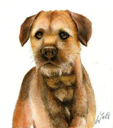 � Original Oil DOG Portrait Painting BORDER TERRIER Art