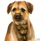 ★ Original Oil DOG Portrait Painting BORDER TERRIER Art