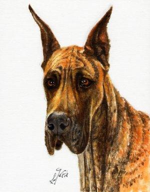 � Original Oil DOG Portrait Painting GREAT DANE Artwork