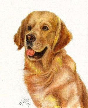 � Original Oil DOG Portrait Painting GOLDEN RETRIEVER �