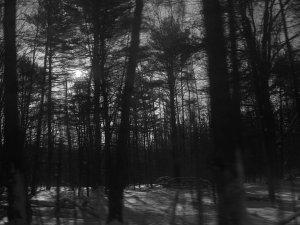 Through the Trees 8X10