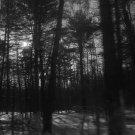 Through the Trees 4X6