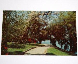 Post Card Highway 61 Summerville Road Charleston South Carolina