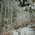 First Autumn Snowfall