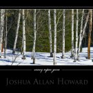 Snowy Aspen Grove by Joshua Allan Howard