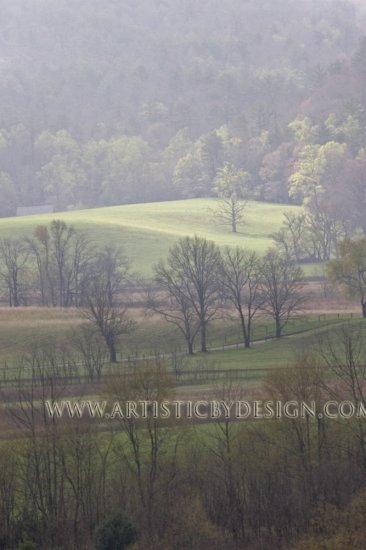 """Light in the Meadow - 20""""x 30"""" Signed Print"""