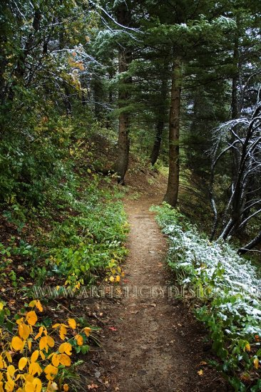 """Guarded Trail - 20""""x 30"""" Signed Print"""