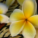 "Plumeria Patterns - 20""x 30"" Signed Print"