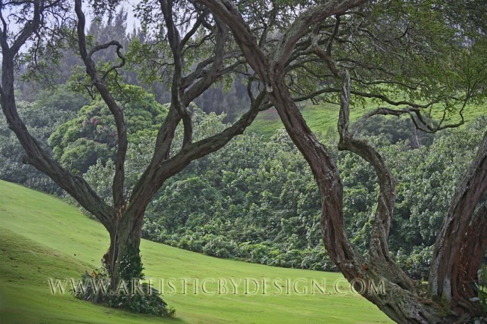 """Gnarled Beauty - 20""""x 30"""" Signed Print"""