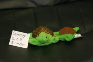 SMALL AND LARGE SPEEDY THE TURTLE BEANIE BABY
