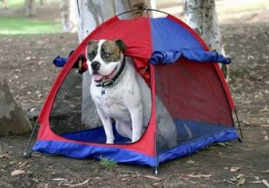 Outward Hound Pet Tent - Medium Perfect for Camping