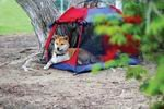 Outward Hound Pet Tent - Large ~ Perfect for Camping