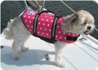 Paws Aboard Nautical, Pink or Blue Polka Dot Designer Dog Safety Life Jacket Vest Preserver XX-Small