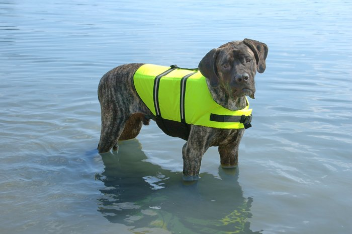 SOLD OUT Paws Aboard Neon Yellow Dog Safety Life Jacket Vest Preserver X-Large