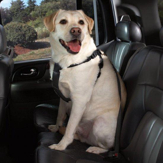 "Cruising Companion Auto Car Safety Dog Harness Large 28""-36"" Blue, Black, Pink"