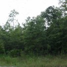 34.76 Acres in Cecil Co., MD