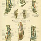 "Foot and Ankle Anatomy Poster 18"" X 24"" Medical Anatomical Chart"