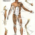 Muscle Joint Human Anatomy Poster 24 X 36 Anatomical Chart Vintage Images