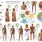 Acupuncture Meridian Pathways & Points Poster 24 X 36 Wall Chart