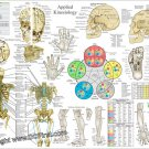 """Applied Kinesiology Poster 18"""" X 24"""" Chiropractic Wall Chart"""